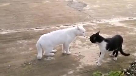 Gatto come Bruce Lee prova la posizione del cobra