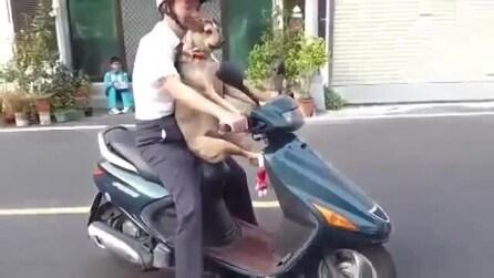 Il cane che va in moto come un boss!