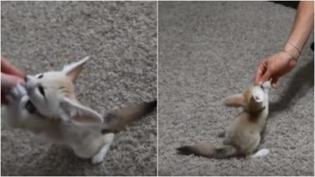 Adottano un insolito animale e provano ad addestrarlo: la scena vi stupirà