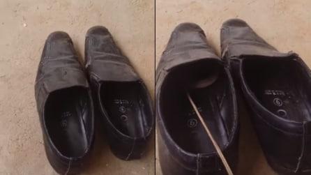 Nota qualcosa che si nasconde nelle scarpe: ma quando riesce a vederlo resta sconvolto