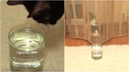 La gatta scopre un bicchiere pieno di acqua frizzante: la sua reazione è esilarante