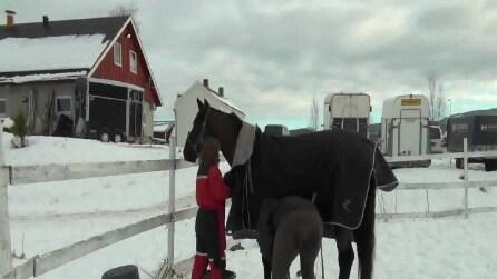 I cavalli utilizzano i simboli per parlare con gli umani