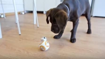 Il divertente incontro tra il cucciolo e BB-8 di Star Wars