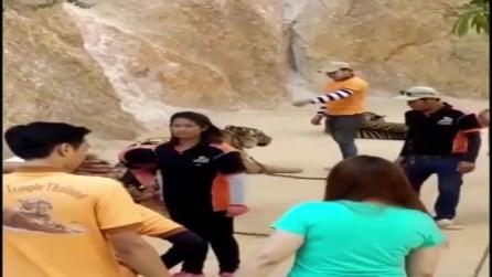 Pugno sulla mascella alla tigre presso il Tempio delle Tigri