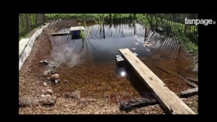 Come costruire una piscina naturale fai da te
