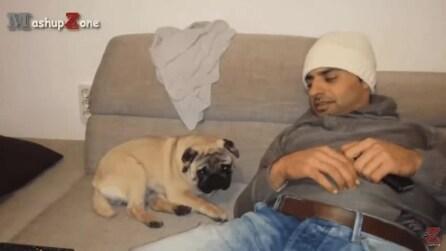 Si è addormentato accanto al padrone: ma quando si sposta guardate che fa il cane
