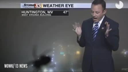 Ragno gigante sbuca fuori durante la diretta tv: il meteorologo non riesce a trattenersi