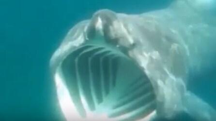 Lo squalo elefante è vicinissimo a lui con la bocca spalancata: la scena è inquietante