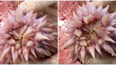 Ecco come è fatta la gola di una tartaruga marina