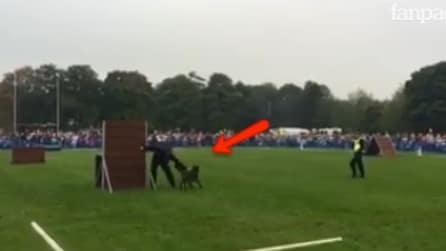 Il cane poliziotto affronta il percorso ad ostacoli: qualcosa però non va come previsto