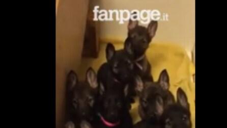 Filma i cuccioli mentre gioca con loro: la scena è imperdibile