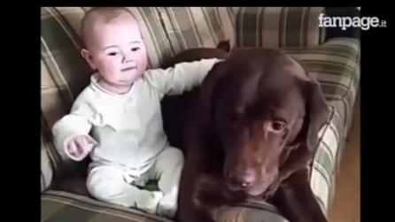 La bimba e il cane insieme sul divano: il loro rapporto vi scalderà il cuore