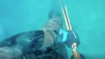 Lo squalo lo attacca e lui riprende la scena: le immagini da brividi