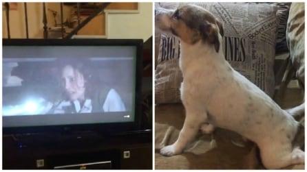 Un Jack Russell guarda per la prima volta un film horror: la sua reazione vi farà innamorare
