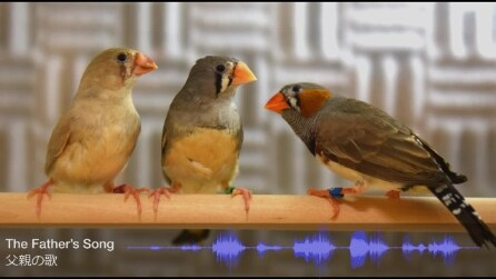 Scoperto come gli uccelli imparano a cantare dal papà