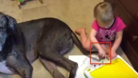 Immerge la coda del suo cane nei colori a tempera: la scena è unica