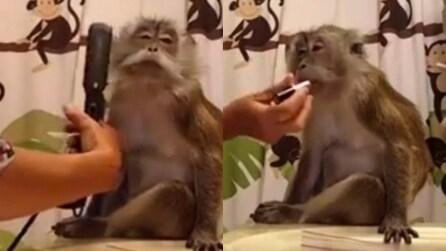 La scimmia che ama le coccole e il make-up: si prepara così per il sabato sera