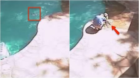 Stava giocando in piscina, ma annega: il padrone salva il suo cane con un gesto miracoloso