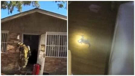 Trova un gatto senza vita sul pavimento: quello che succede dopo pochi minuti è da non credere