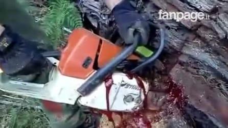 """Homem corta a árvore e começa a escorrer """"sangue"""" do tronco"""