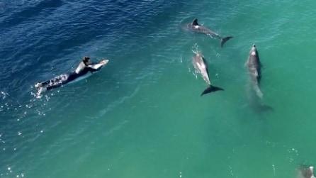 La magia della natura: lo spettacolo dei delfini tra i surfisti
