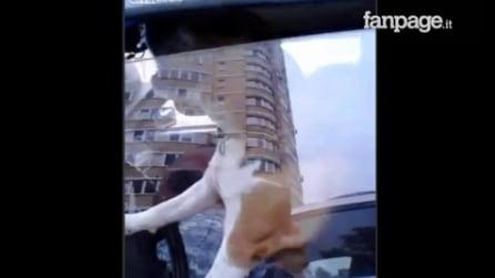 Il cane solo in macchina cerca di attirare l'attenzione del padrone: ciò che fa è sorprendente