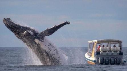 Una megattera è a pochissimi metri dalla barca: ciò che fanno i turisti però ha dell'assurdo