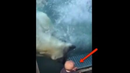 Tenete d'occhio il bambino a terra: l'orso polare prova ad aggredirlo e la sua reazione non si fa attendere