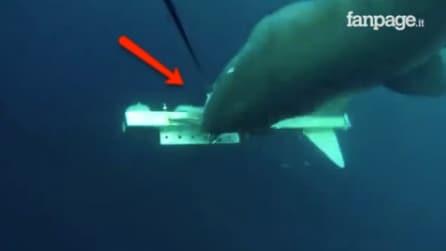 Il robot sottomarino si trasforma in un delizioso bocconcino: la scena è da brividi