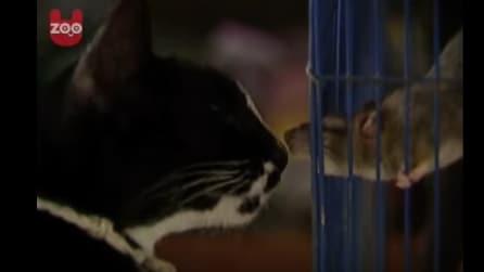 Il gatto trova un topolino in casa: quello che accade dopo però è davvero bizzarro