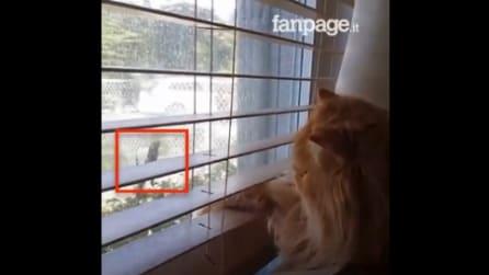 Il gatto nota un bizzarro intruso alla finestra: la sua reazione è comica