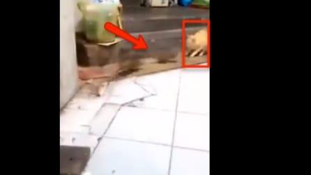 Due topi litigano e il gatto si spaventa: quando vedrete la scena capirete perché