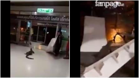 Una lucertola gigante sta per entrare in un negozio: panico tra i clienti