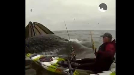 L'uomo è in kayak, ma ciò che gli accade dopo pochi minuti è impressionante