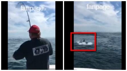"""L'uomo pesca una spigola, ma qualcuno la """"ruba"""": la scena è unica"""