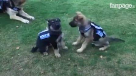 Cani poliziotto si diventa: il primo giorno di addestramento dei cuccioli