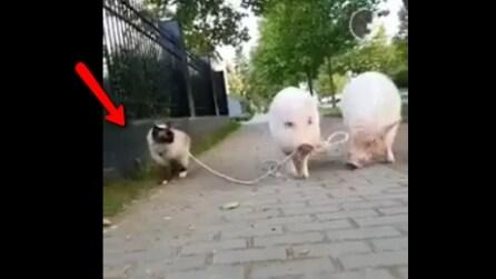 Due mailini e un gatto al gunizaglio: avete mai visto una scena simile?