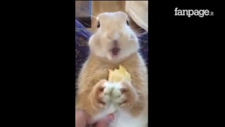 Il coniglietto fa uno spuntino insolito: la scena è adorabile