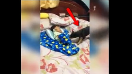 Molto più attento di una baby-sitter: il gesto di questo cagnolino vi coglierà di sorpresa