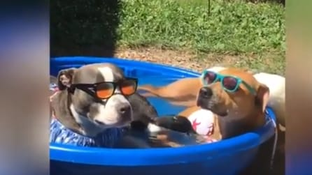 Fa troppo caldo anche per loro: due cani e due anatre decidono di fare un bagno in piscina