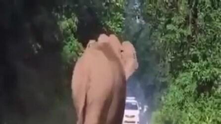 L'elefante libera la strada da macchine e persone: il motivo è bellissimo
