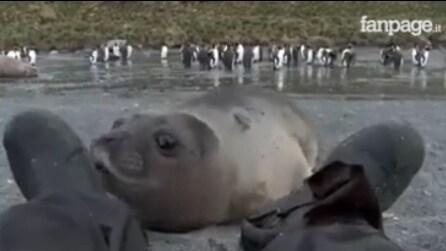 La foca è incuriosita da una strada creatura sdraiata sulla riva: si tratta di un uomo ma la sua reazione è fantastica