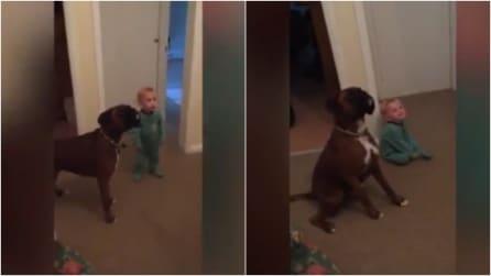 Un bambino e il suo cane fanno tutto insieme, compreso rispondere ai comandi