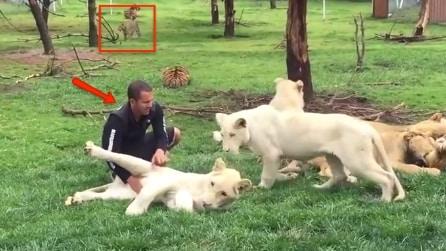 """Il leopardo lo """"punta"""" da lontano: guardate cosa succede alle spalle dell'addetto dello zoo"""