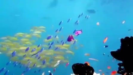 Lo straordinario spettacolo di colori che regala la Grande Barriera Corallina