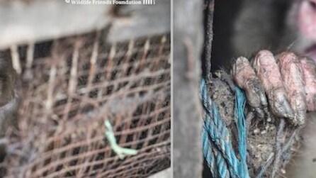 Vive chiusa in gabbia per 25 anni: l'estremo salvataggio di una scimmia
