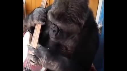 Il gorilla suona il basso dei Red Hot Chili Peppers