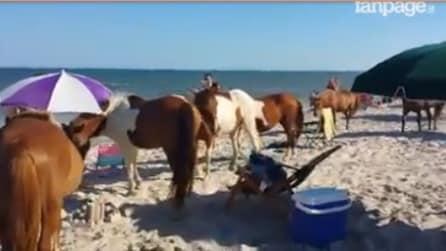 I turisti stanno facendo il bagno in spiaggia, ma una mandria di cavalli invade il lido: la scena è unica