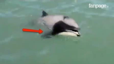 Il comportamento viene filmato per la prima volta: ciò che fa questo delfino vi lascerà a bocca aperta