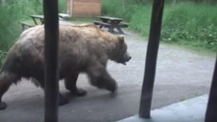 Un grosso orso bruno fuori dalla porta: lo stupore delle persone all'interno